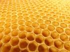 honeycomb-530987_960_72_seagul.jpg